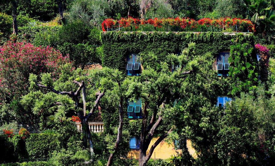 Importação de Produtos de Higiene Residência coberta por vegetação trepadeira, árvores e vegetação densa ao redor