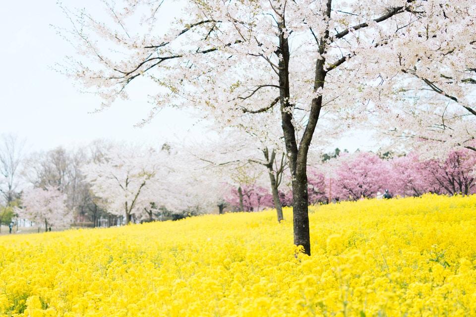Importação de Produtos de Higiene Jardim com muitas árvores floridas e tapete de flores amarelas
